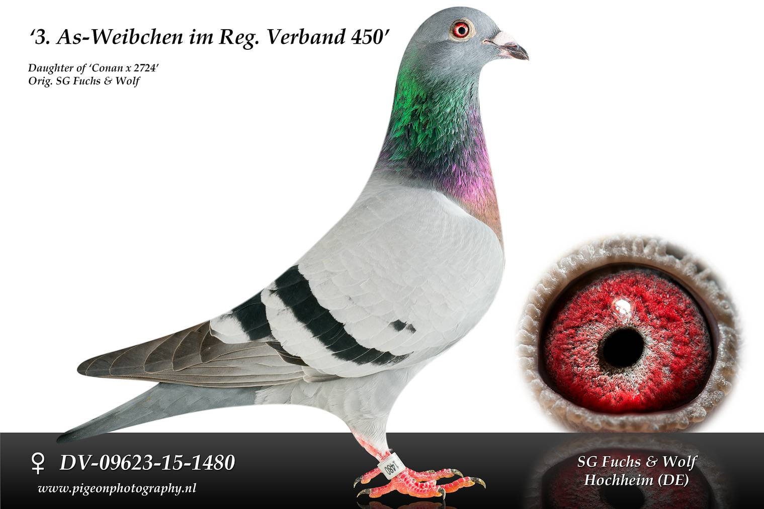 DV 09623 15 1480